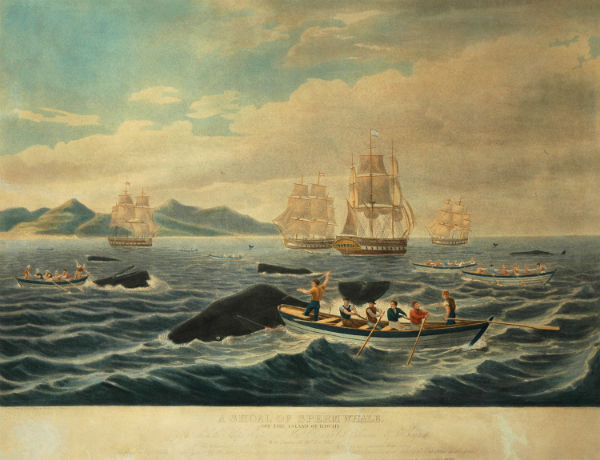The Sinking of the 'Essex'; or, The Whale