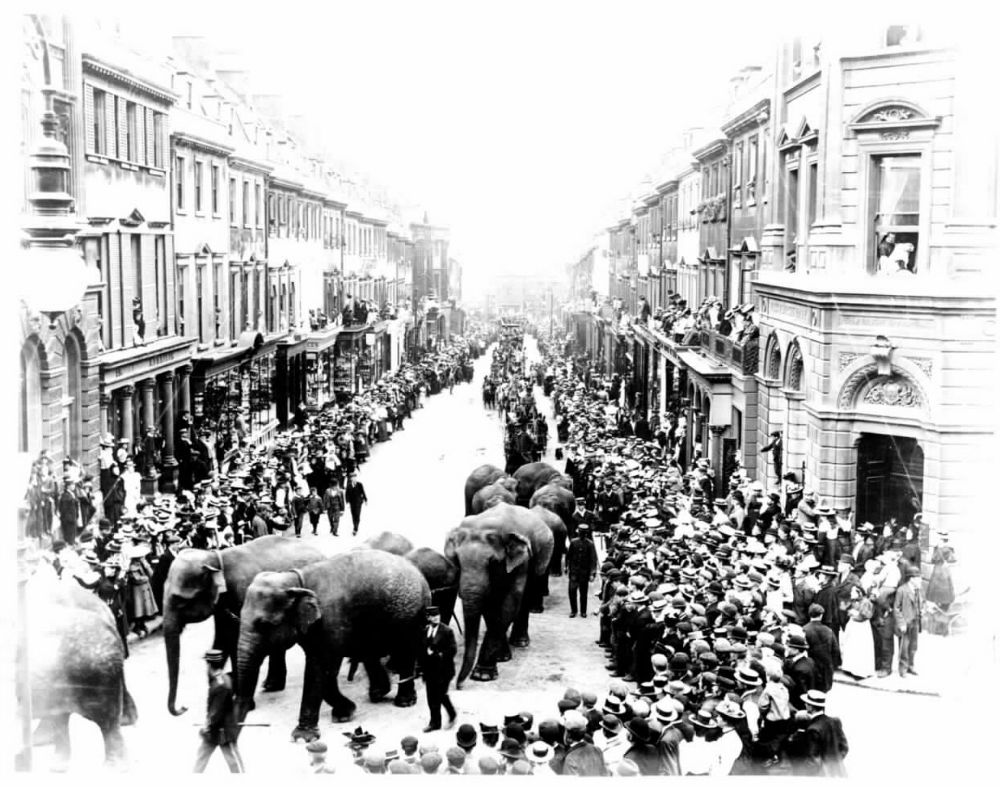 Elephants on Milsom Street, Bath